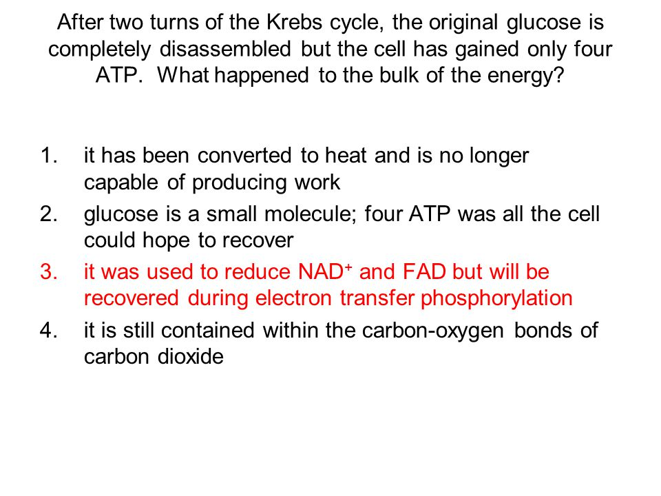 After two turns of the Krebs cycle, the original glucose is completely disassembled but the cell has gained only four ATP. What happened to the bulk of the energy