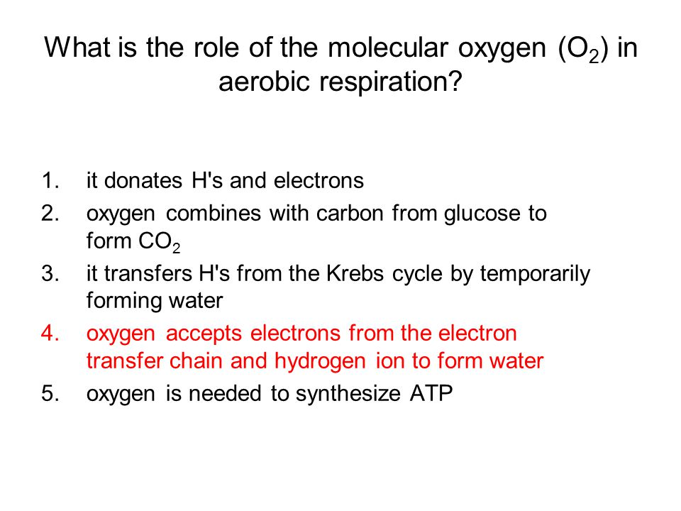 What is the role of the molecular oxygen (O2) in aerobic respiration