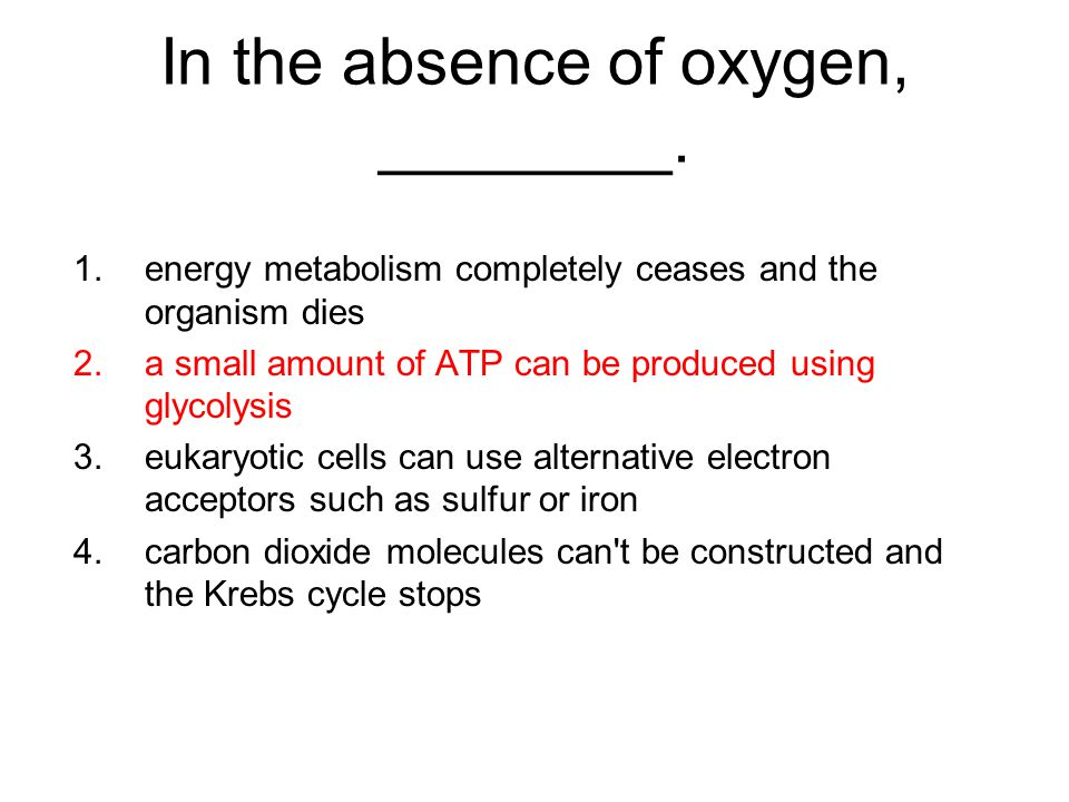 In the absence of oxygen, ________.