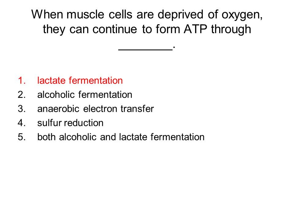 When muscle cells are deprived of oxygen, they can continue to form ATP through ________.