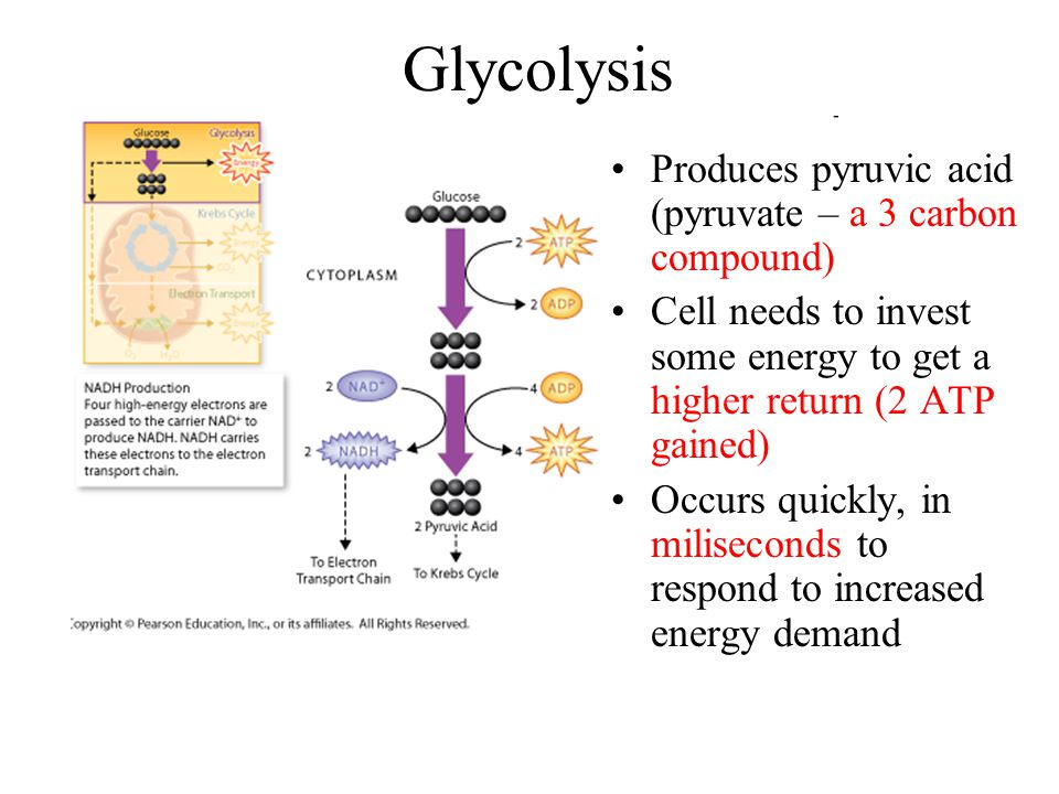 Glycolysis Produces pyruvic acid (pyruvate – a 3 carbon compound)
