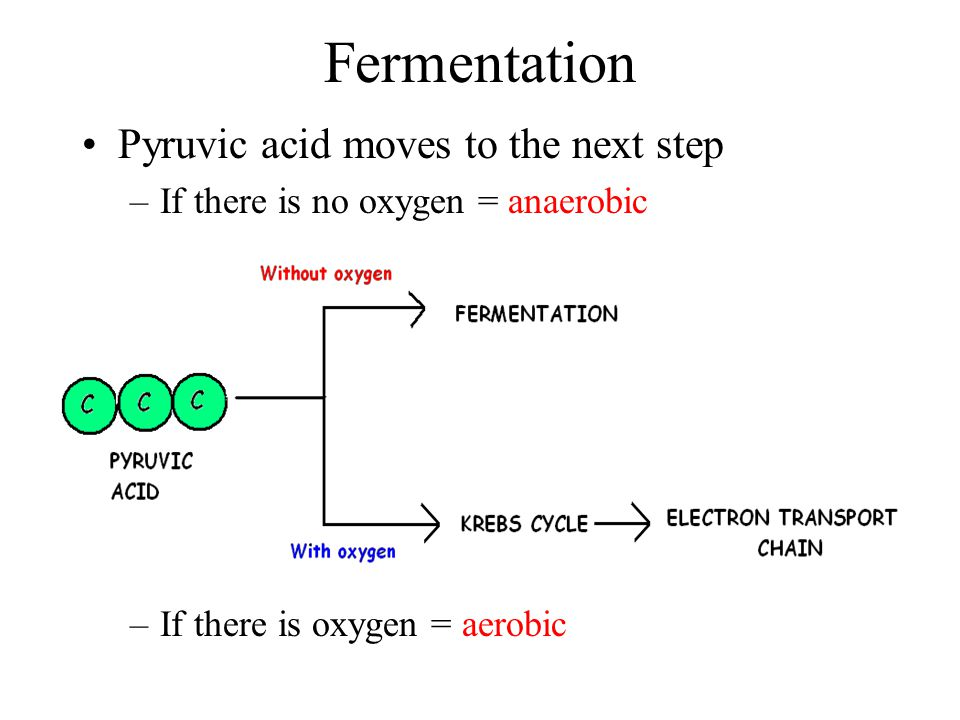 Fermentation Pyruvic acid moves to the next step