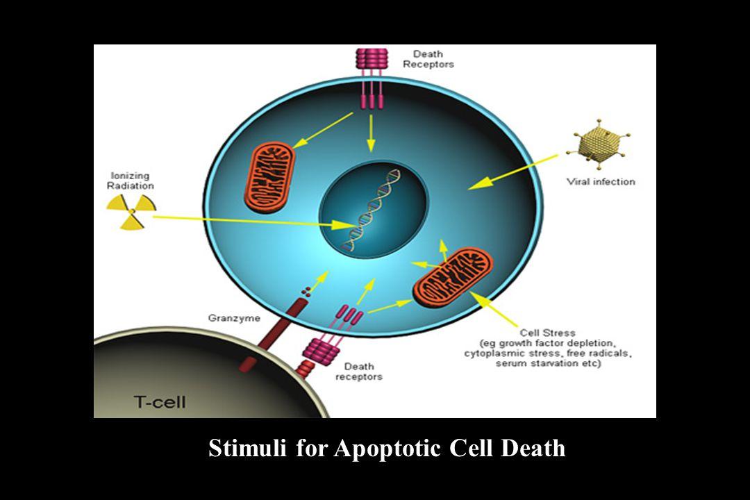 Stimuli for Apoptotic Cell Death