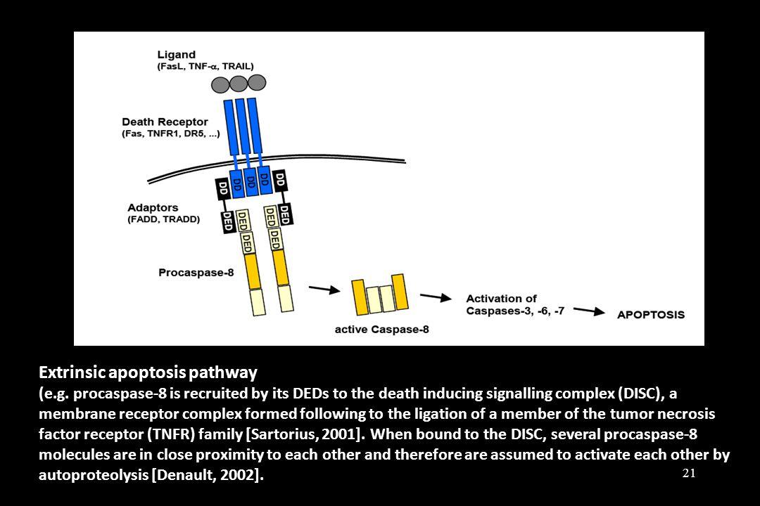 Extrinsic apoptosis pathway