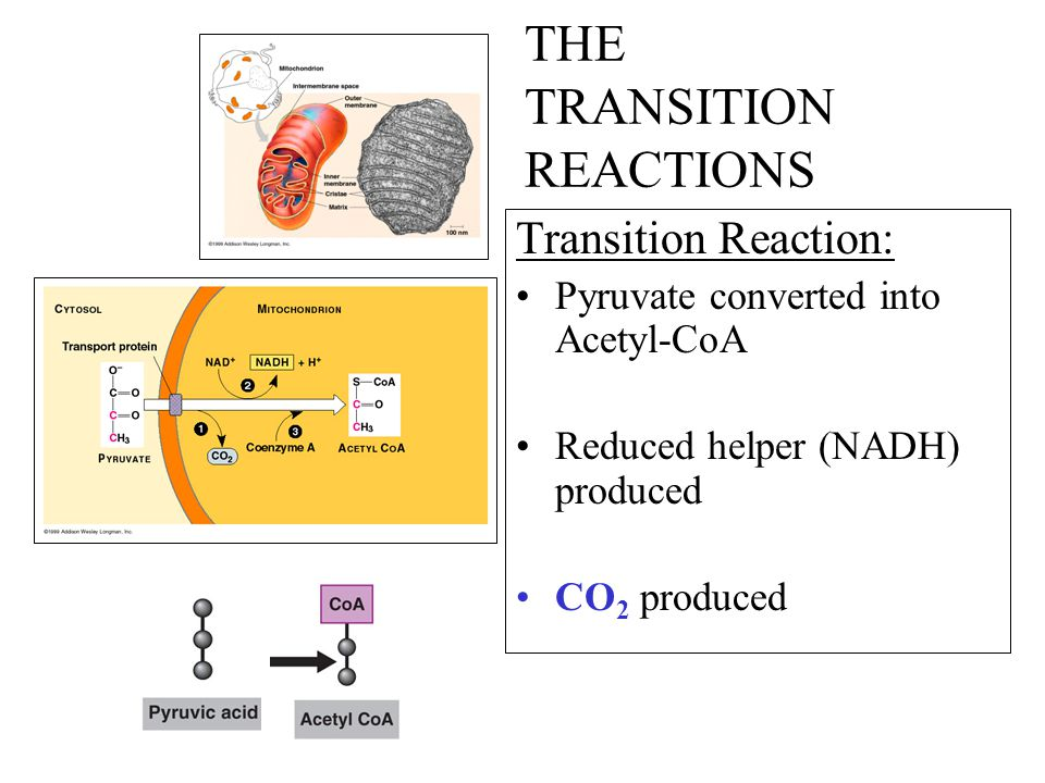THE TRANSITION REACTIONS