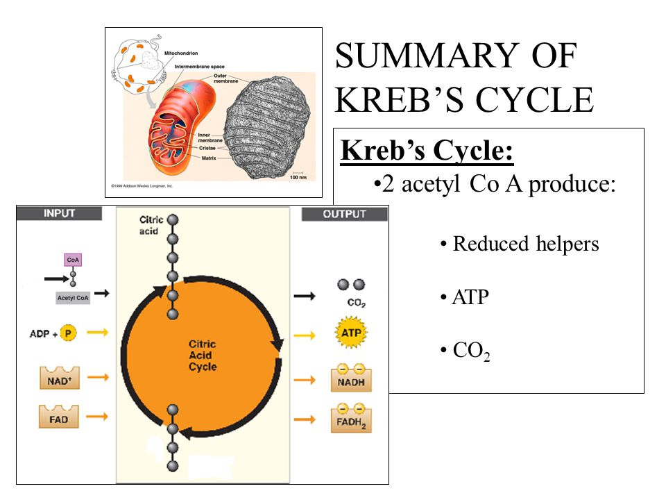 SUMMARY OF KREB'S CYCLE Kreb's Cycle: 2 acetyl Co A produce: