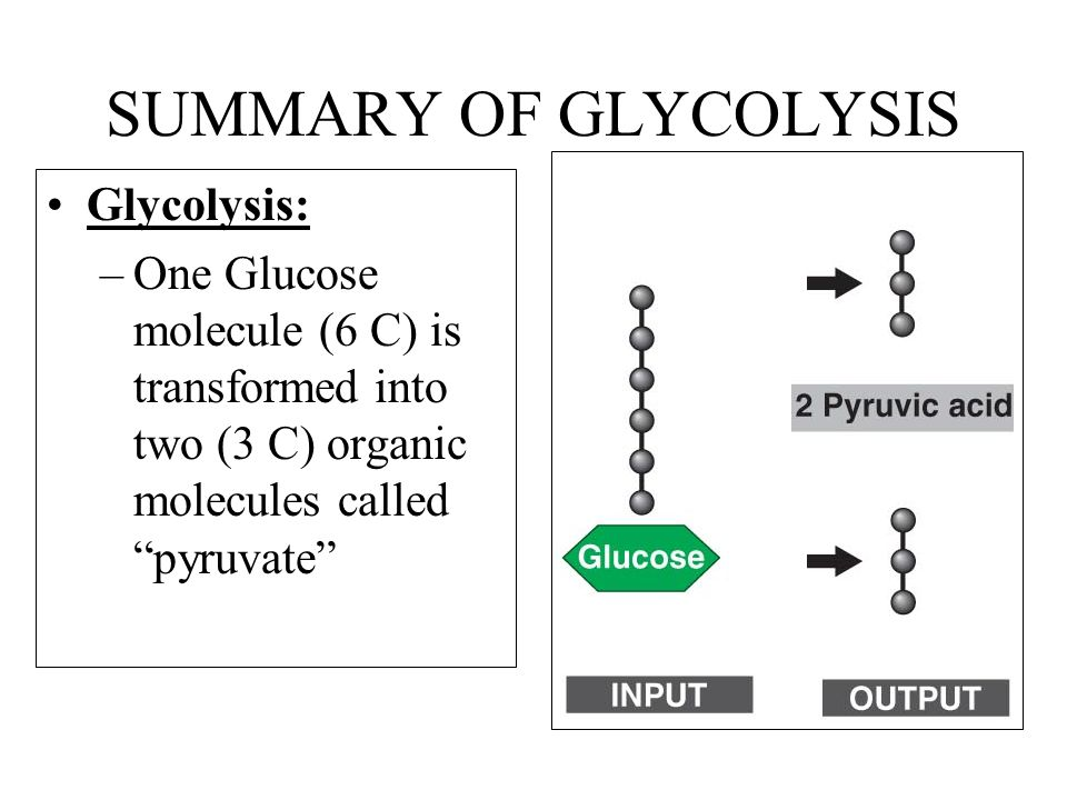 SUMMARY OF GLYCOLYSIS Glycolysis: