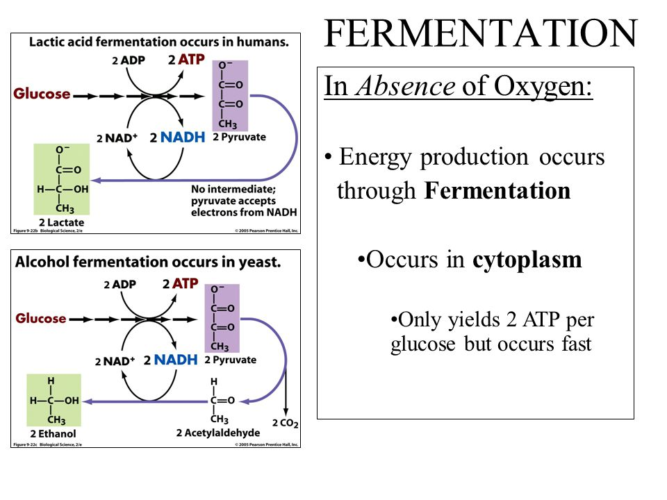 FERMENTATION In Absence of Oxygen: Energy production occurs