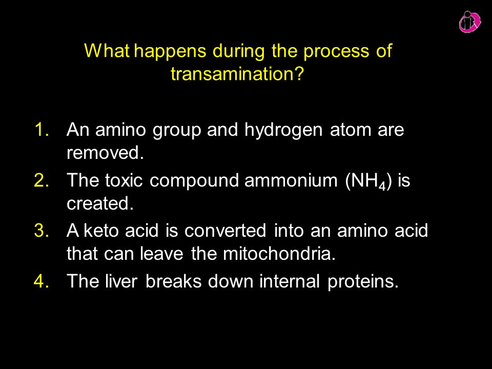 What happens during the process of transamination