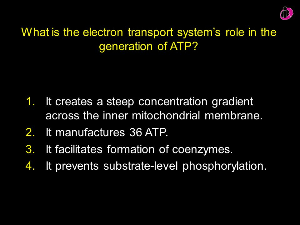 What is the electron transport system's role in the generation of ATP