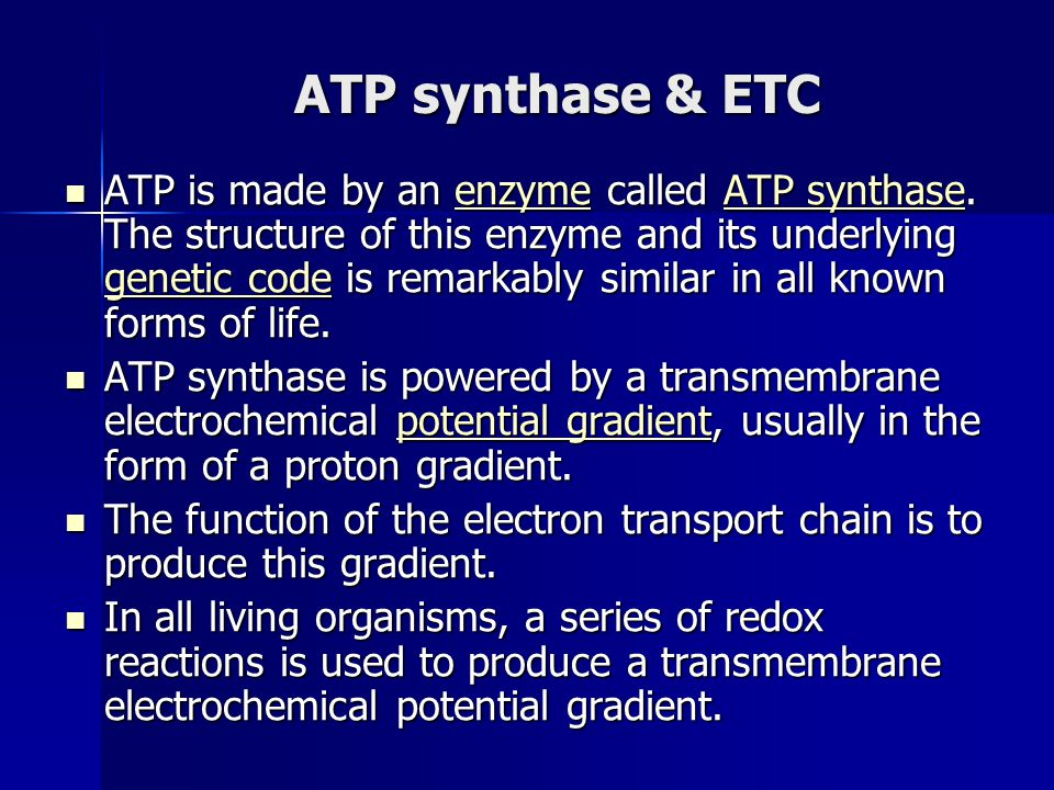 ATP synthase & ETC