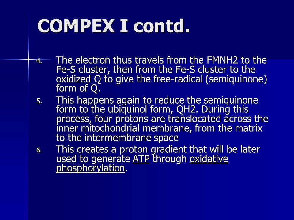 COMPEX I contd.