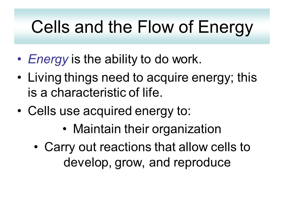 Cells and the Flow of Energy