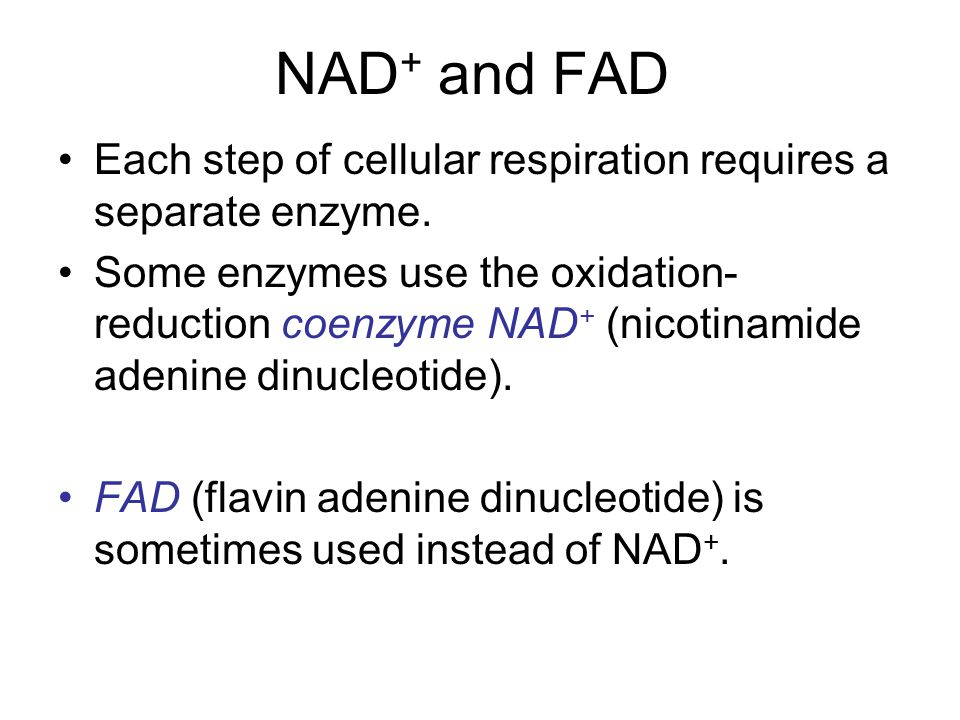 NAD+ and FAD Each step of cellular respiration requires a separate enzyme.