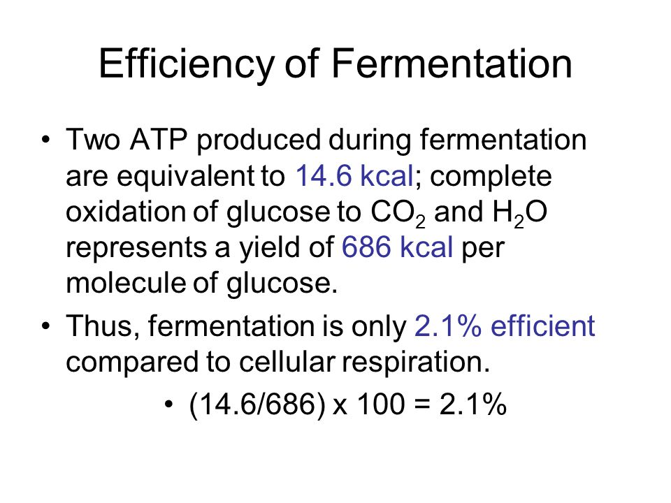 Efficiency of Fermentation
