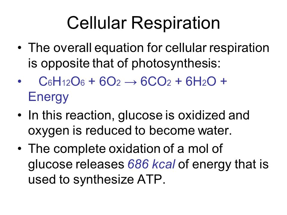 Cellular Respiration The overall equation for cellular respiration is opposite that of photosynthesis: