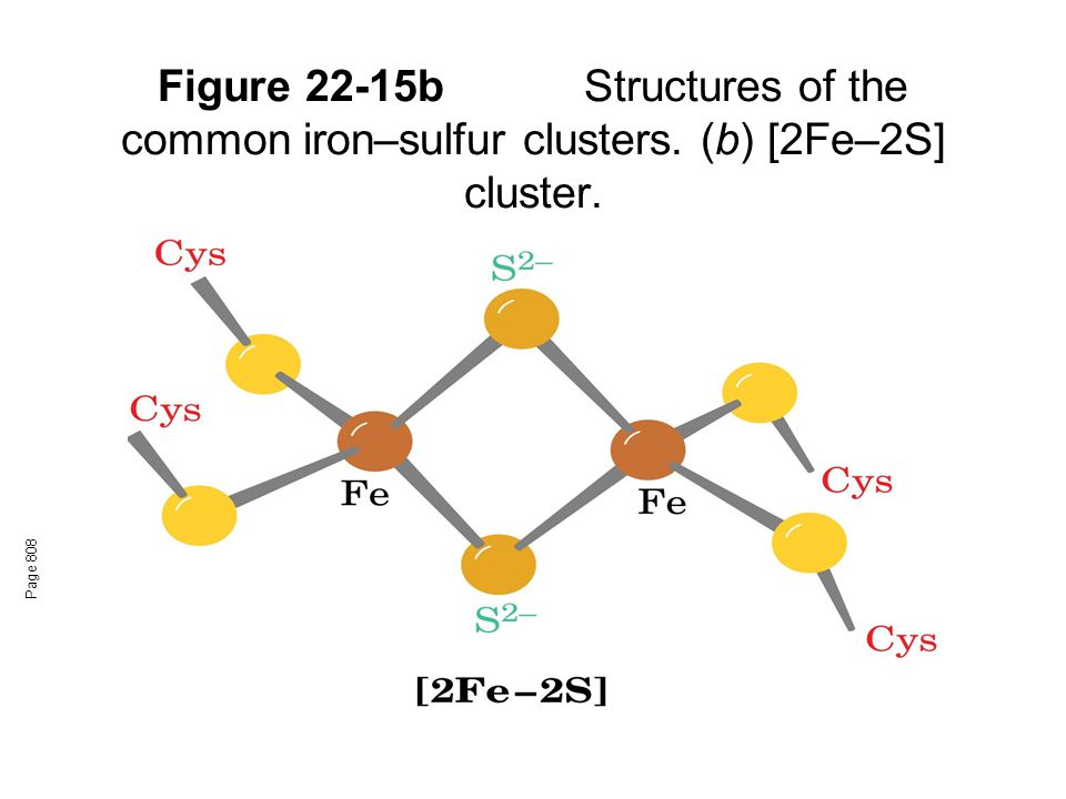 Figure 22-15b. Structures of the common iron–sulfur clusters