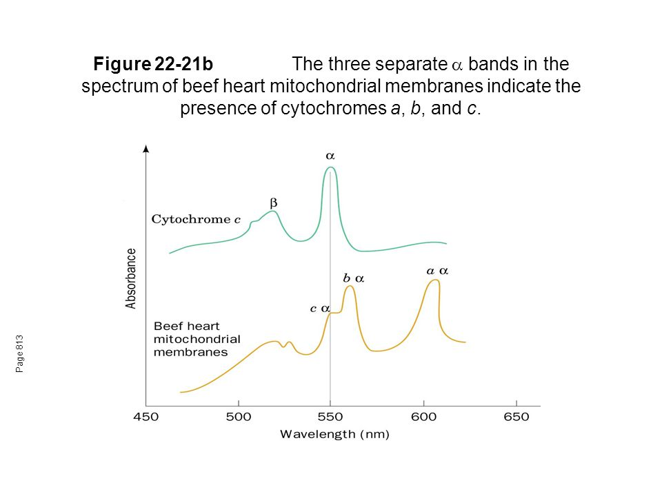 Figure 22-21b The three separate  bands in the spectrum of beef heart mitochondrial membranes indicate the presence of cytochromes a, b, and c.