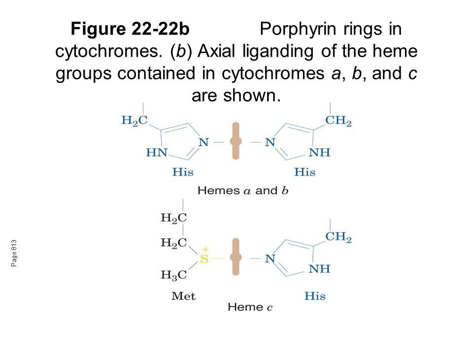 Figure 22-22b. Porphyrin rings in cytochromes