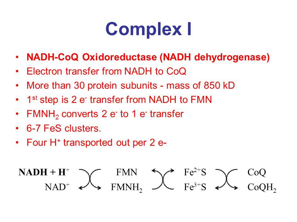 Complex I NADH-CoQ Oxidoreductase (NADH dehydrogenase)