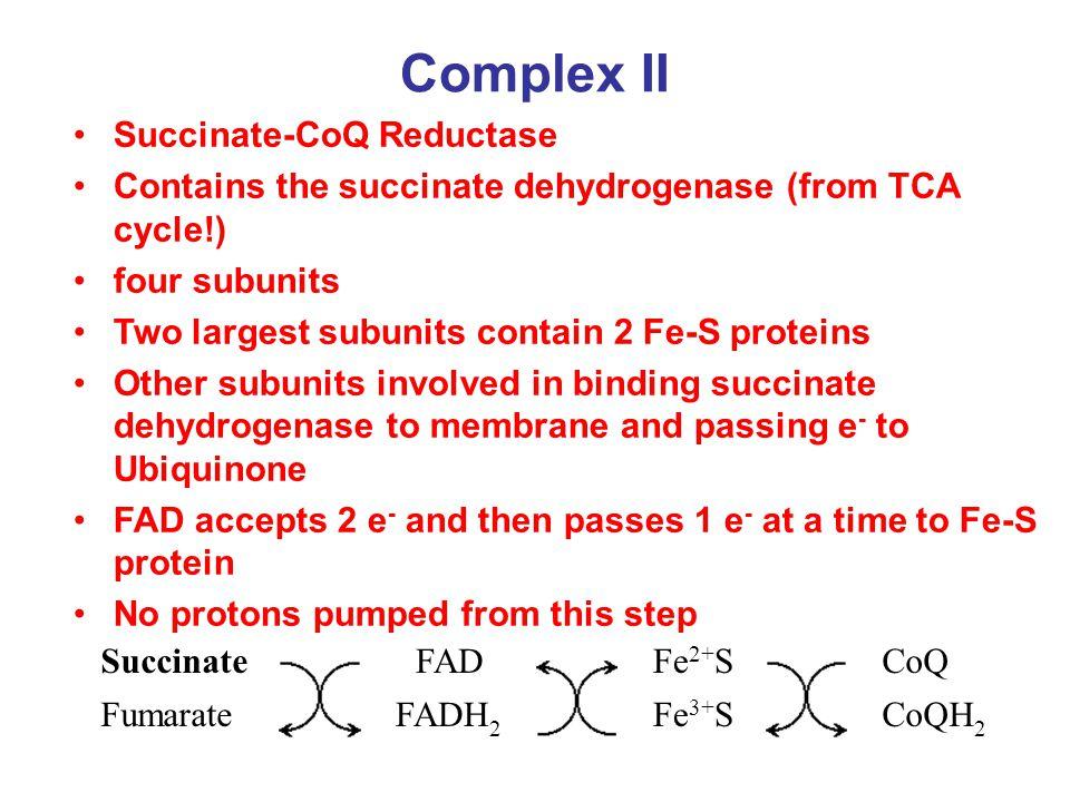 Complex II Succinate-CoQ Reductase