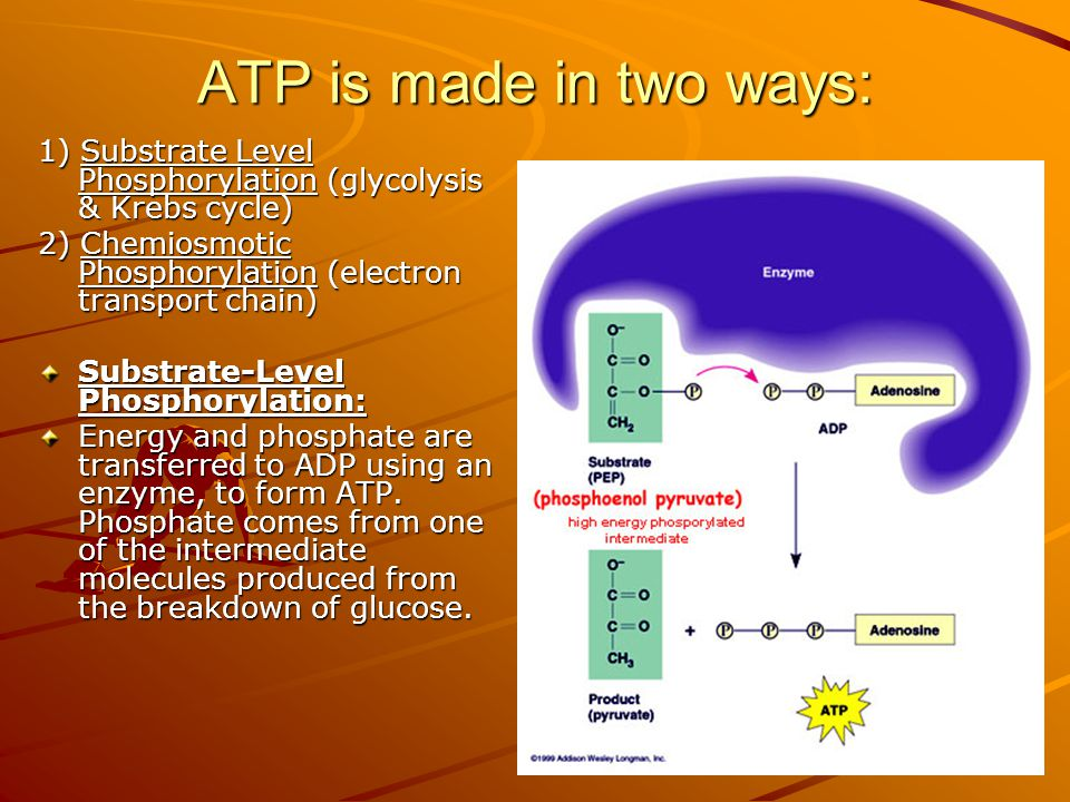 ATP is made in two ways: 1) Substrate Level Phosphorylation (glycolysis & Krebs cycle) 2) Chemiosmotic Phosphorylation (electron transport chain)
