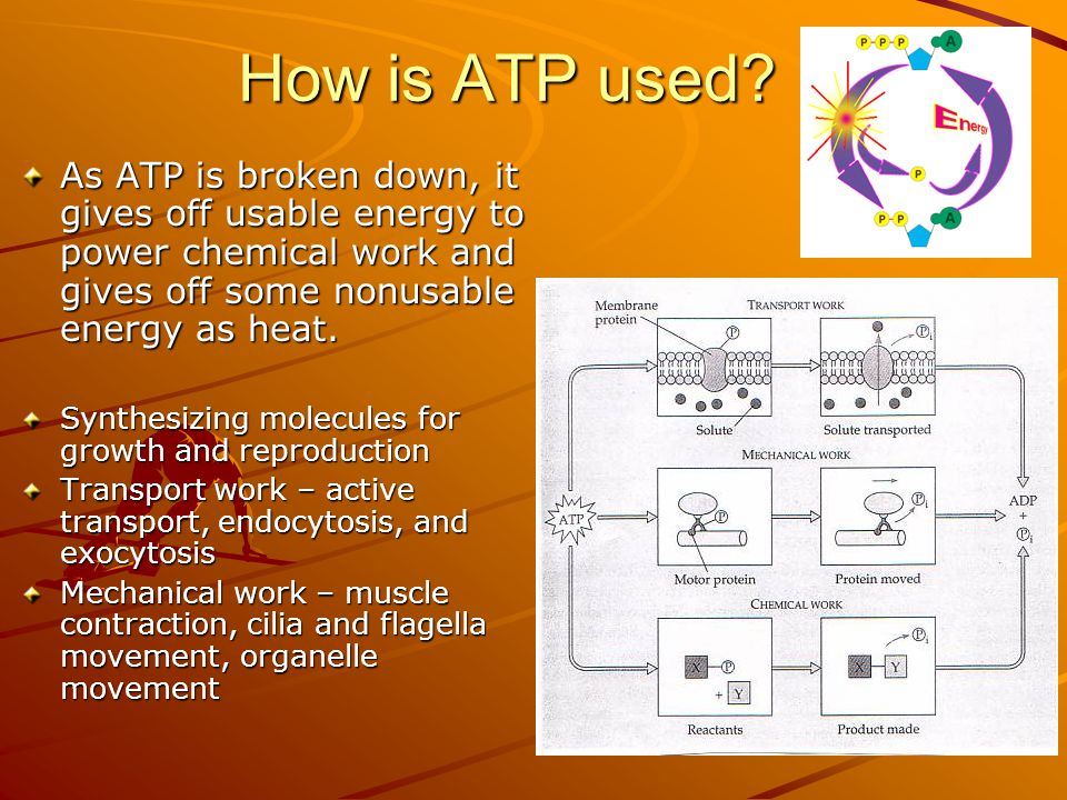 How is ATP used As ATP is broken down, it gives off usable energy to power chemical work and gives off some nonusable energy as heat.