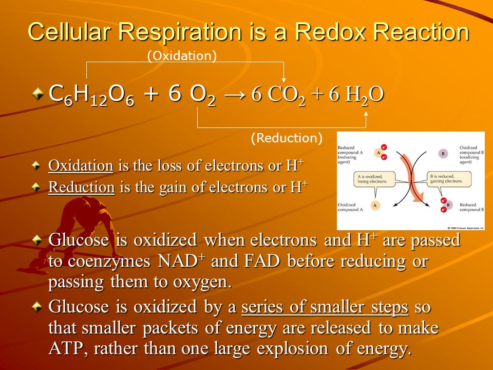 Cellular Respiration is a Redox Reaction