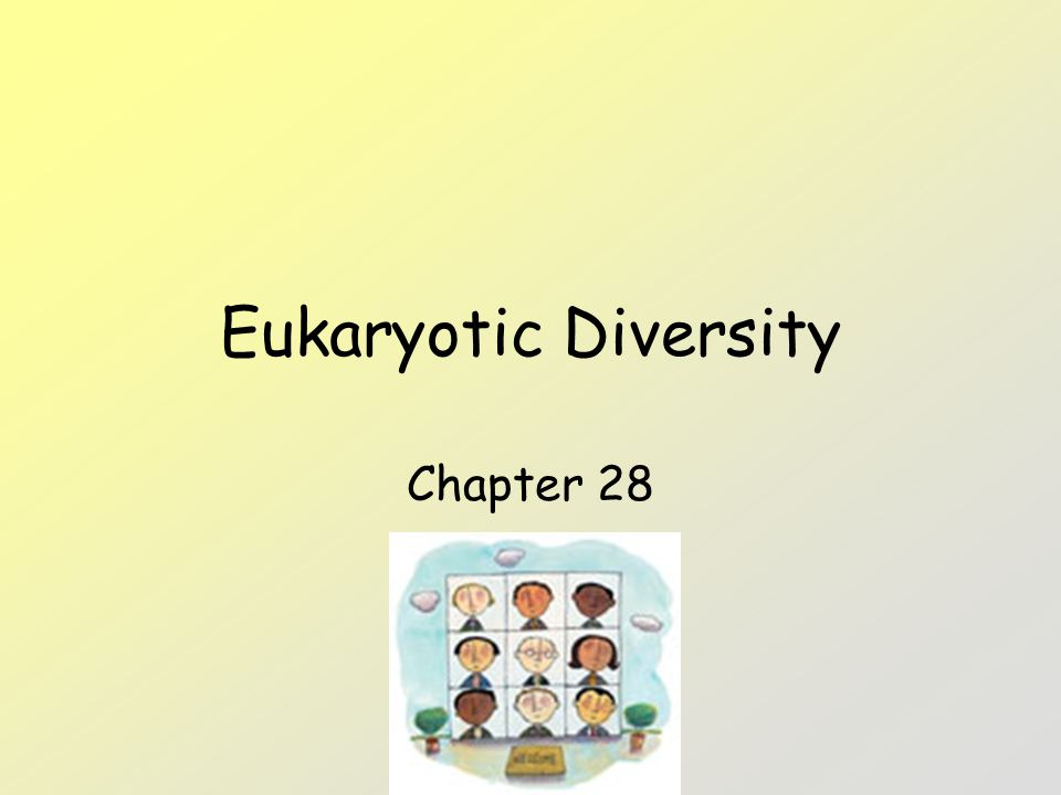 Eukaryotic Diversity Chapter 28