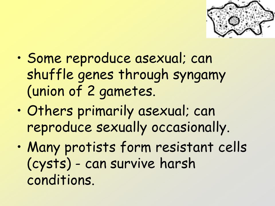 Some reproduce asexual; can shuffle genes through syngamy (union of 2 gametes.