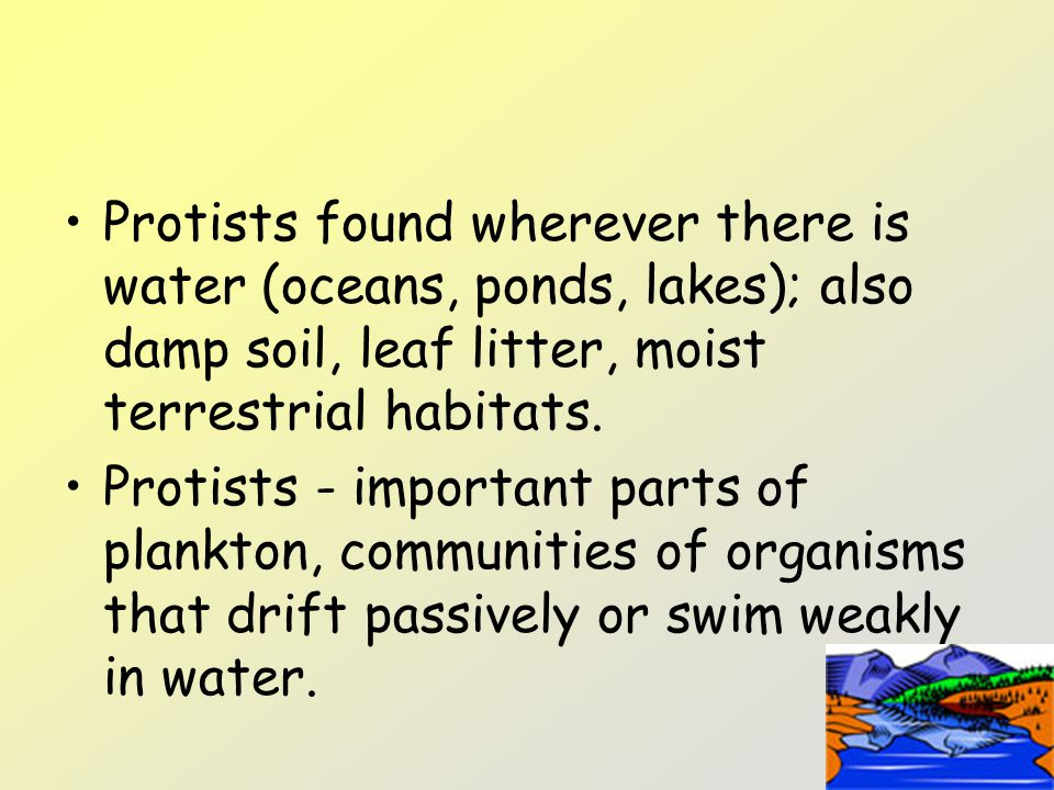 Protists found wherever there is water (oceans, ponds, lakes); also damp soil, leaf litter, moist terrestrial habitats.