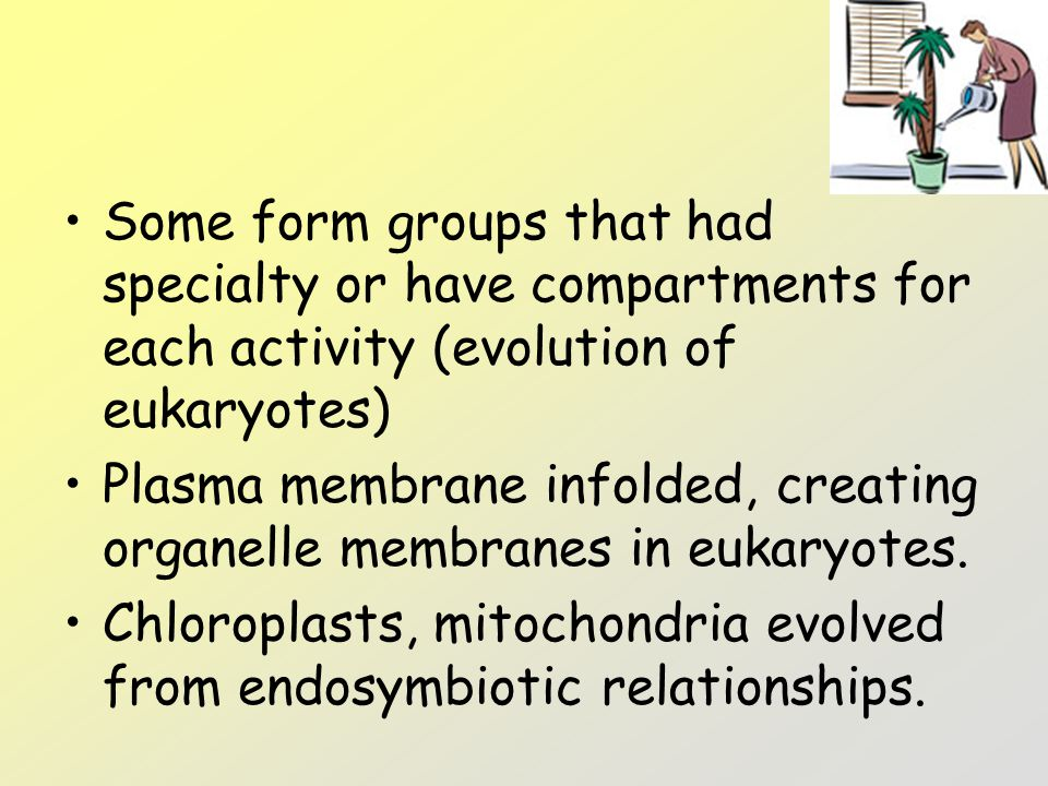 Some form groups that had specialty or have compartments for each activity (evolution of eukaryotes)