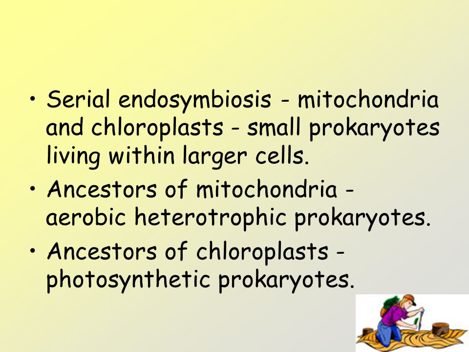 Serial endosymbiosis - mitochondria and chloroplasts - small prokaryotes living within larger cells.