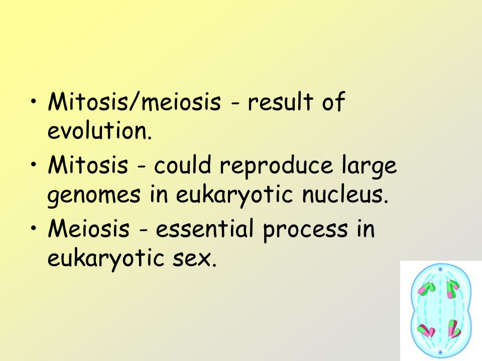 Mitosis/meiosis - result of evolution.