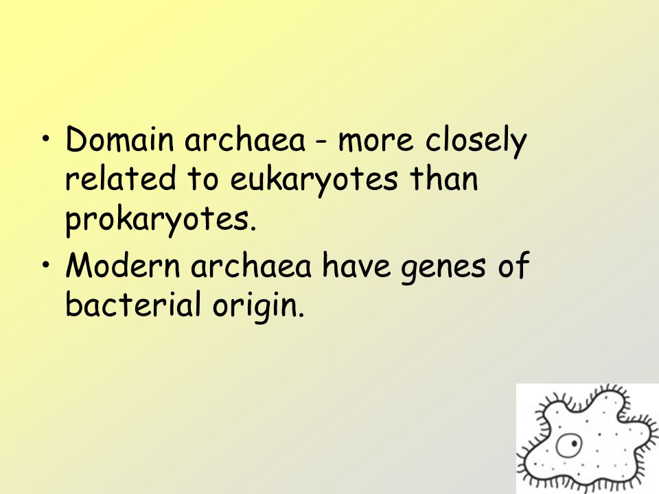 Domain archaea - more closely related to eukaryotes than prokaryotes.