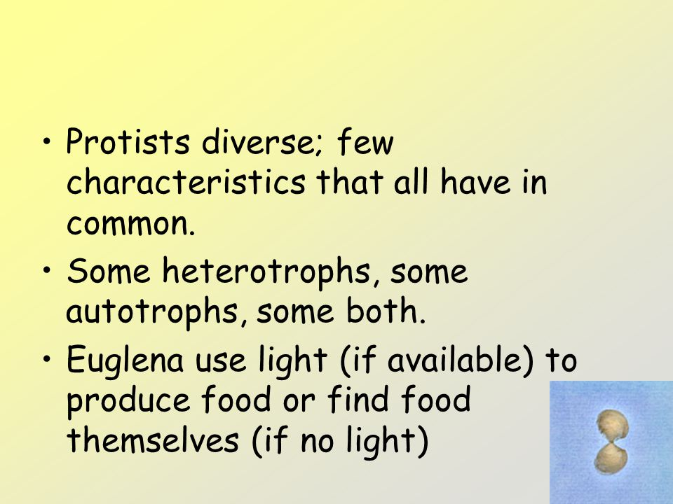 Protists diverse; few characteristics that all have in common.