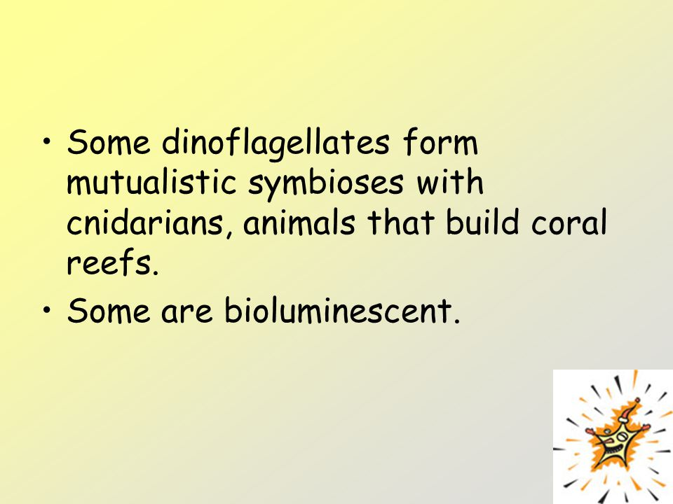 Some dinoflagellates form mutualistic symbioses with cnidarians, animals that build coral reefs.