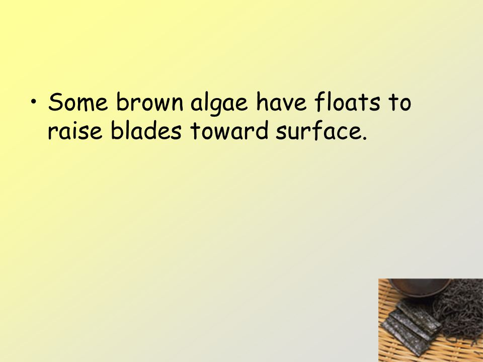 Some brown algae have floats to raise blades toward surface.
