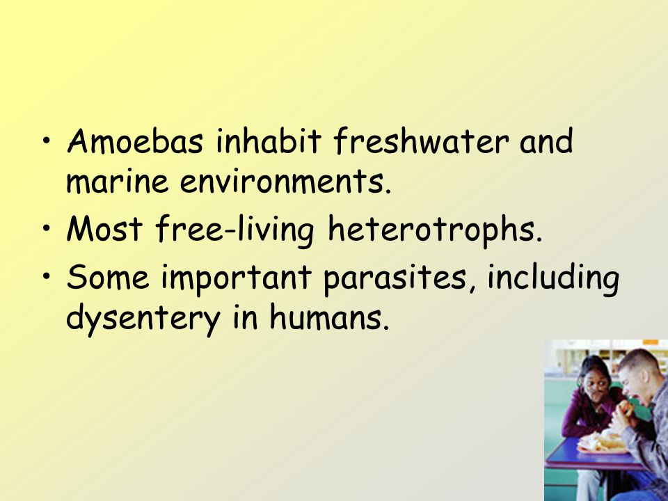 Amoebas inhabit freshwater and marine environments.