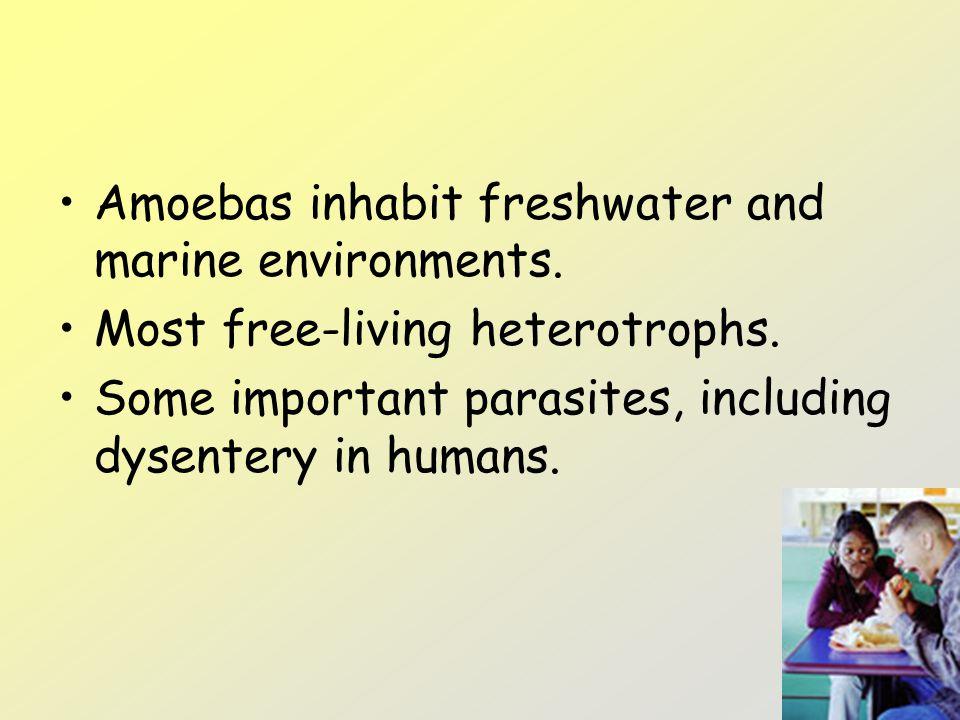Amoebas inhabit freshwater and marine environments.