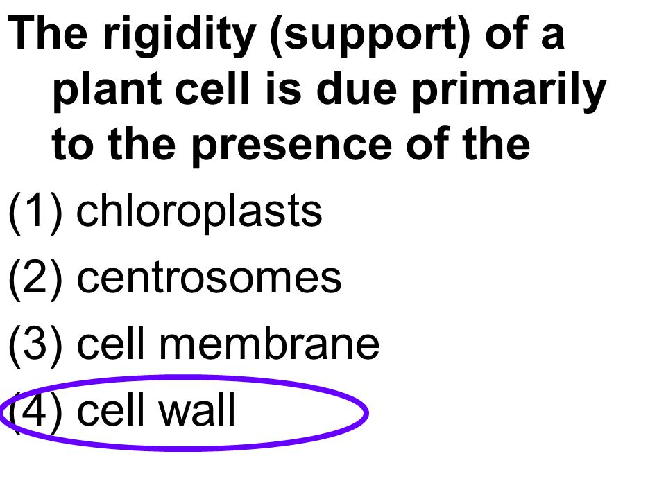 The rigidity (support) of a plant cell is due primarily to the presence of the
