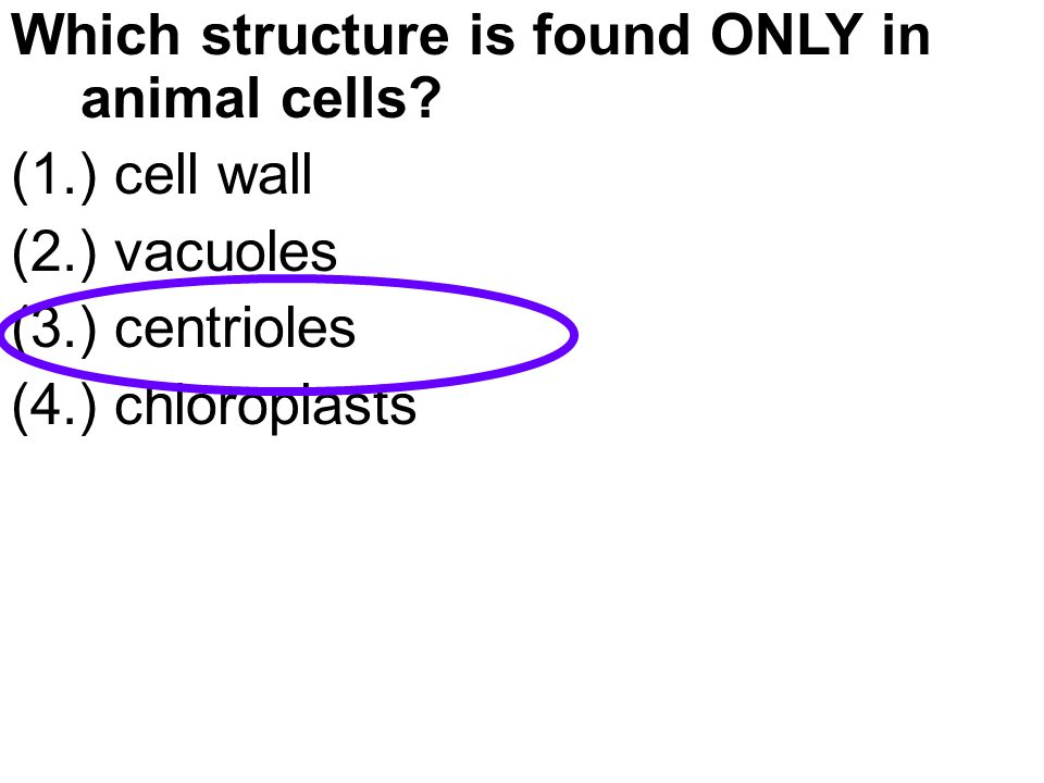 Which structure is found ONLY in animal cells