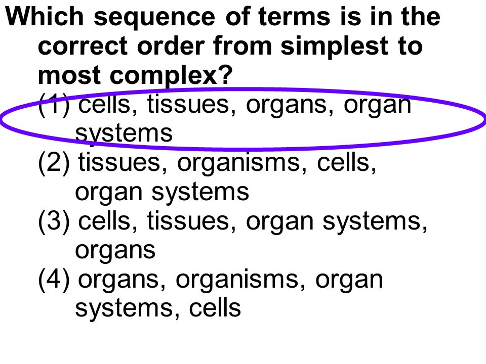 Which sequence of terms is in the correct order from simplest to most complex.
