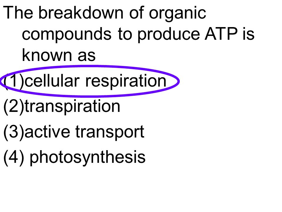 The breakdown of organic compounds to produce ATP is known as