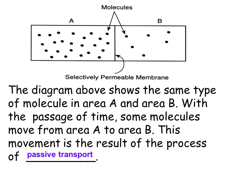 The diagram above shows the same type of molecule in area A and area B