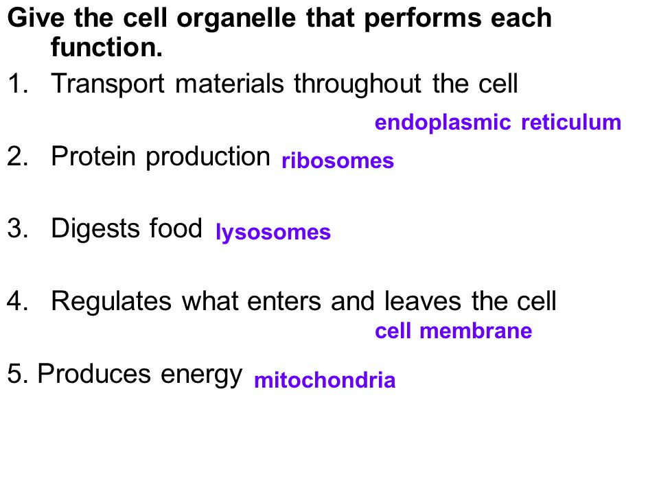 Give the cell organelle that performs each function.