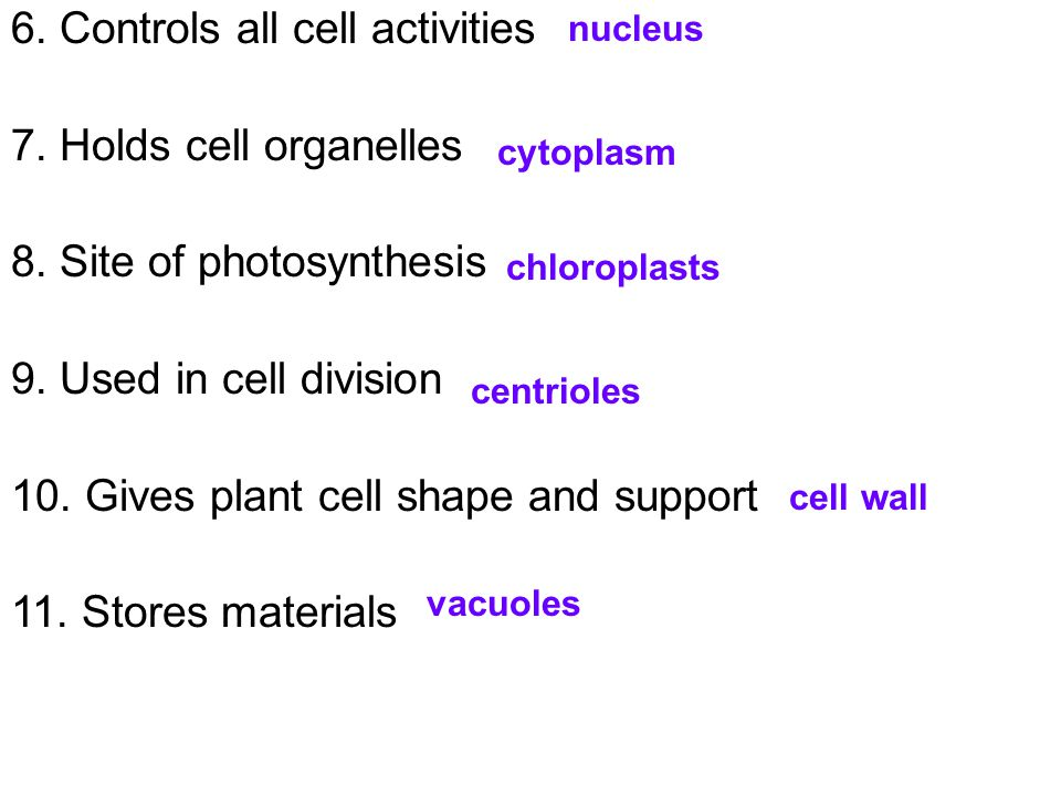 6. Controls all cell activities 7. Holds cell organelles