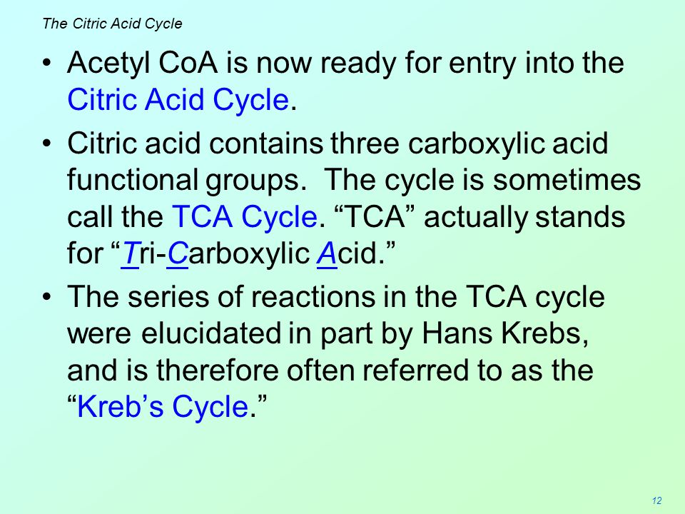 Acetyl CoA is now ready for entry into the Citric Acid Cycle.