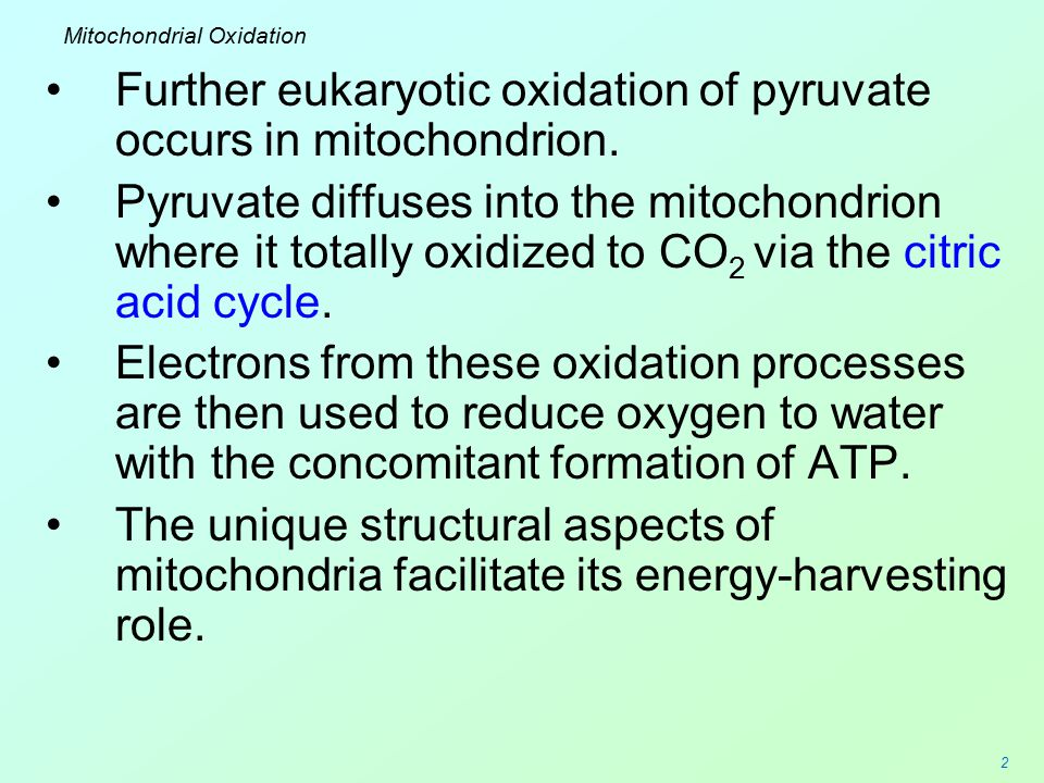 Mitochondrial Oxidation