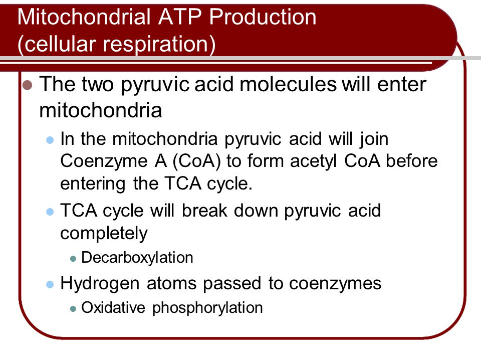 Mitochondrial ATP Production (cellular respiration)